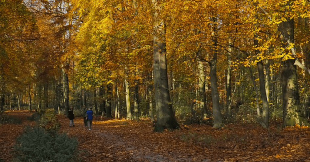 Northern Ireland County Forest and Parks